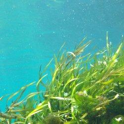 seaweed-1129226